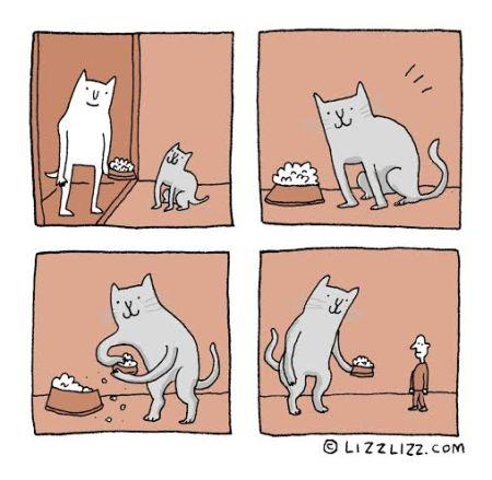 Liz cats 1